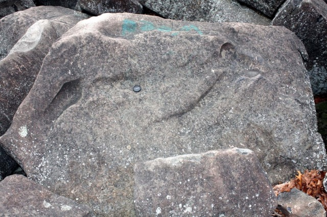 Deeply-scoured surface of a diabase boulder in Ringing Rocks boulder field