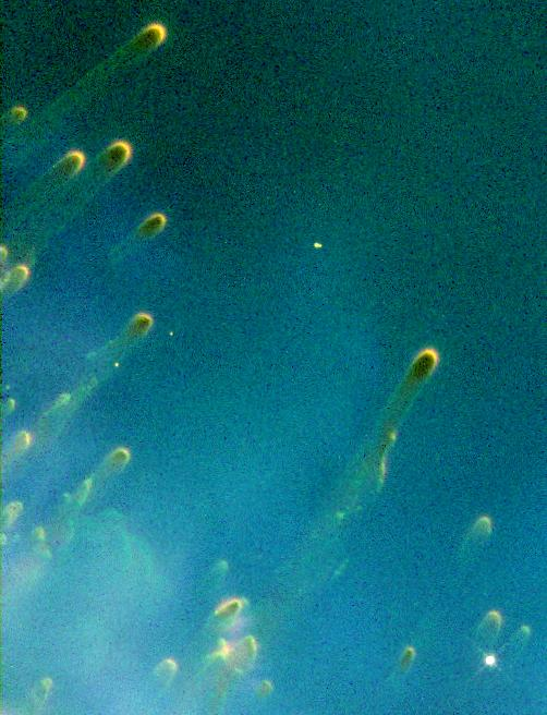Cometary knots in Helix Nebula